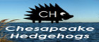 Chesapeake Hedgehogs